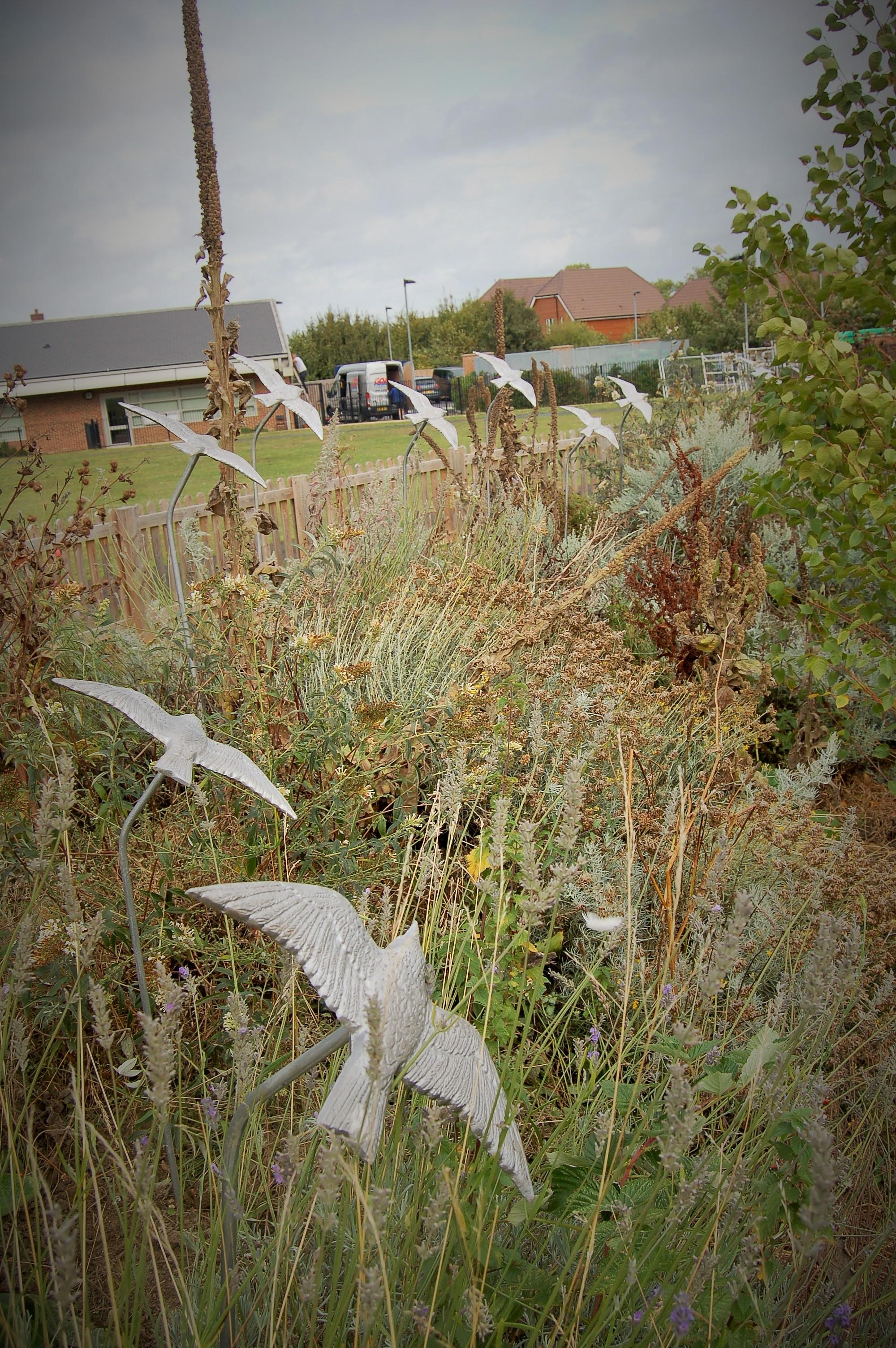 Murmuration of Starlings Oxford (12)