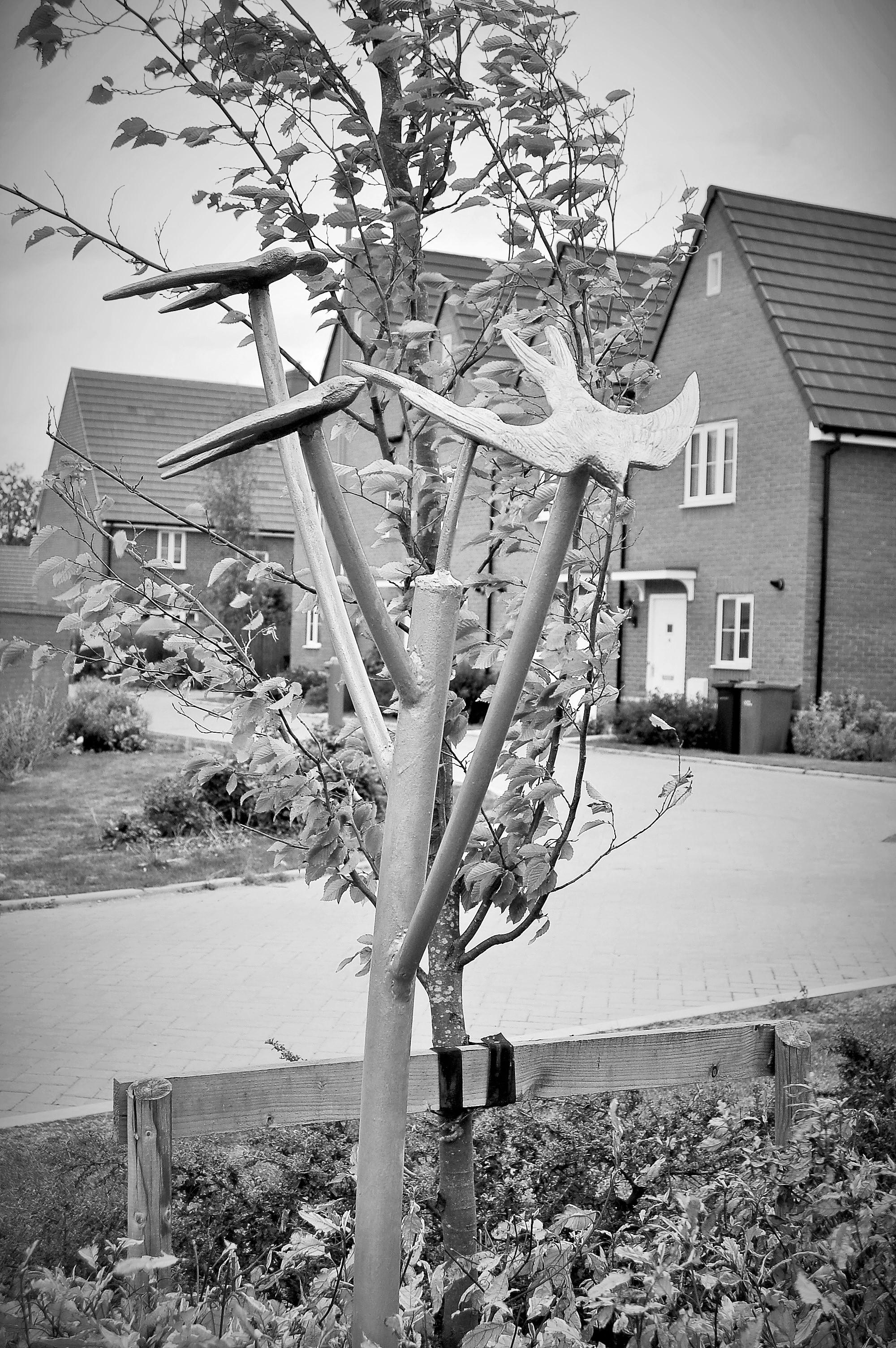 Murmuration of Starlings Oxford (4)
