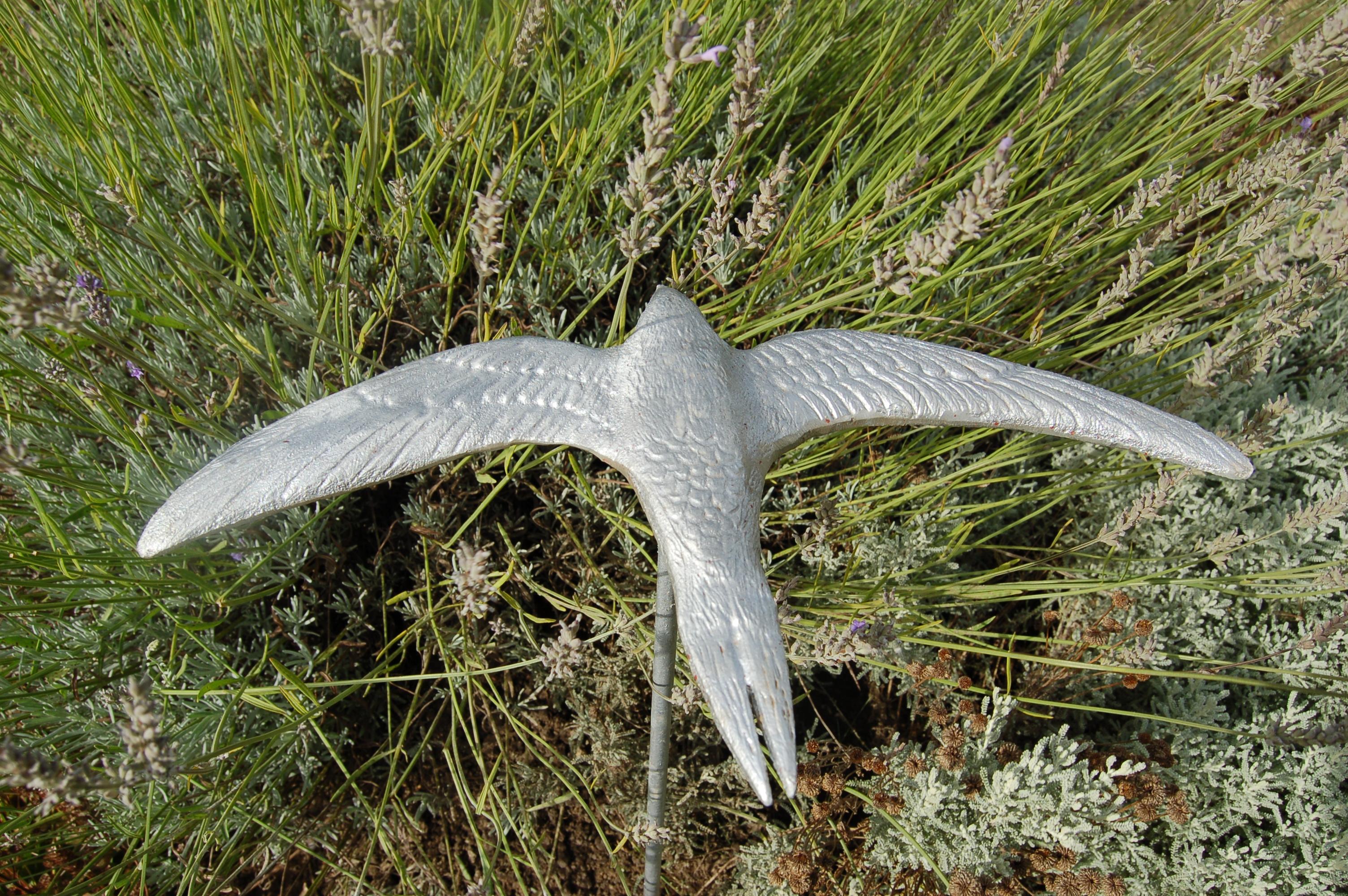 Murmuration of Starlings Oxford (8)